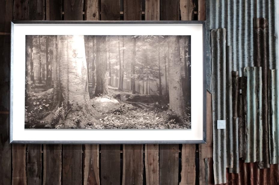 Original Forest in Pennsylvania - Sugimoto 1980 dscf8690
