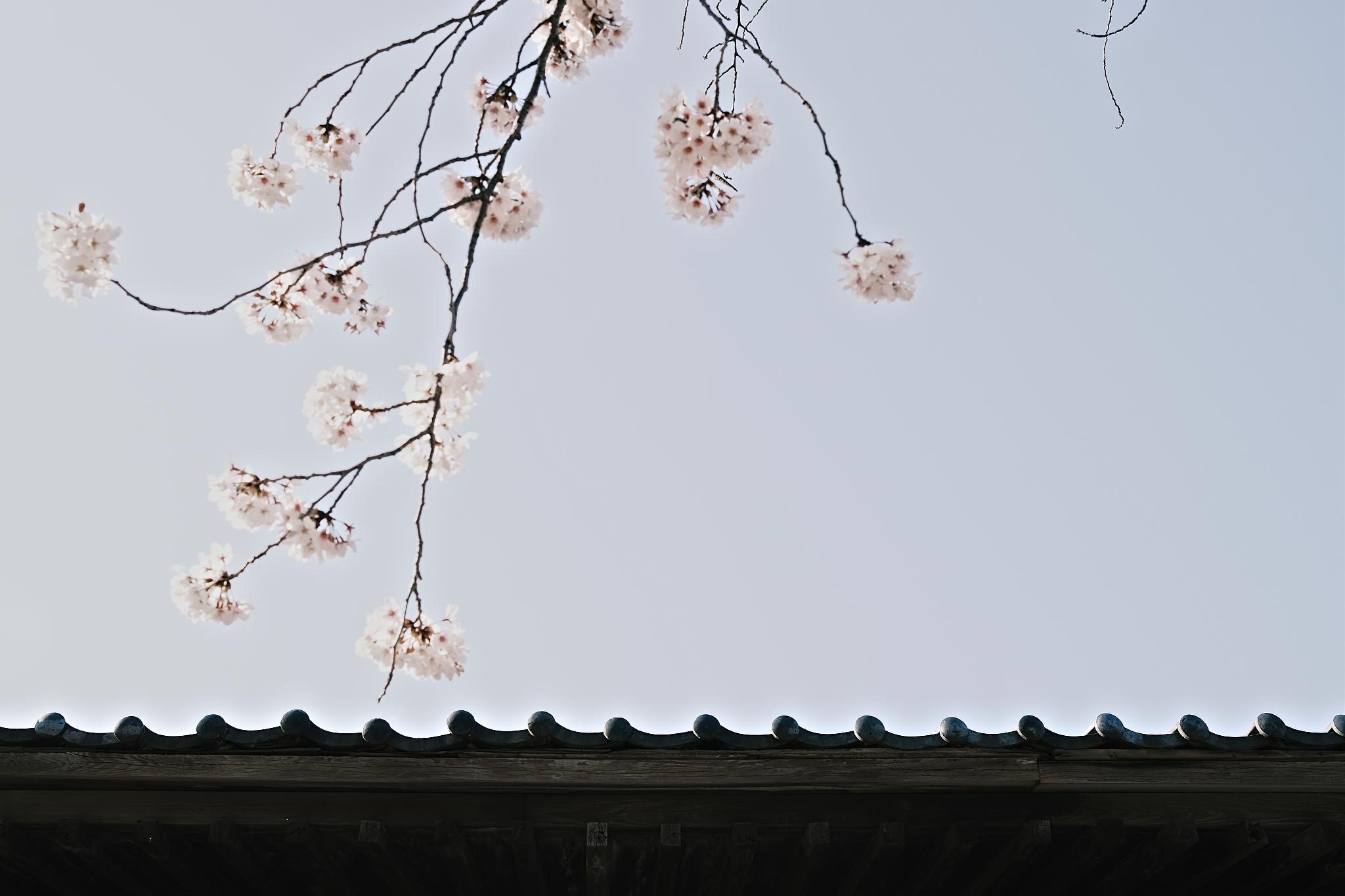 TOKYO-202003-00240