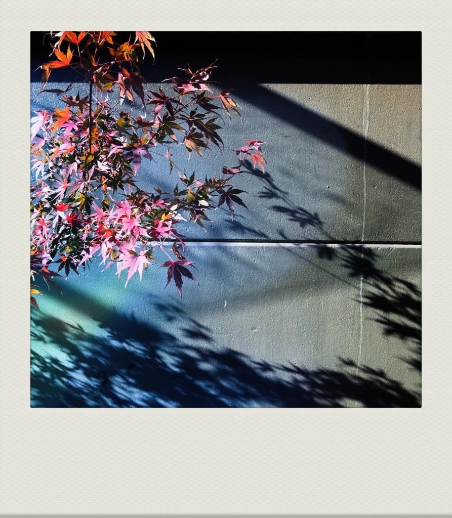 TOKYO-PH-202007-00006