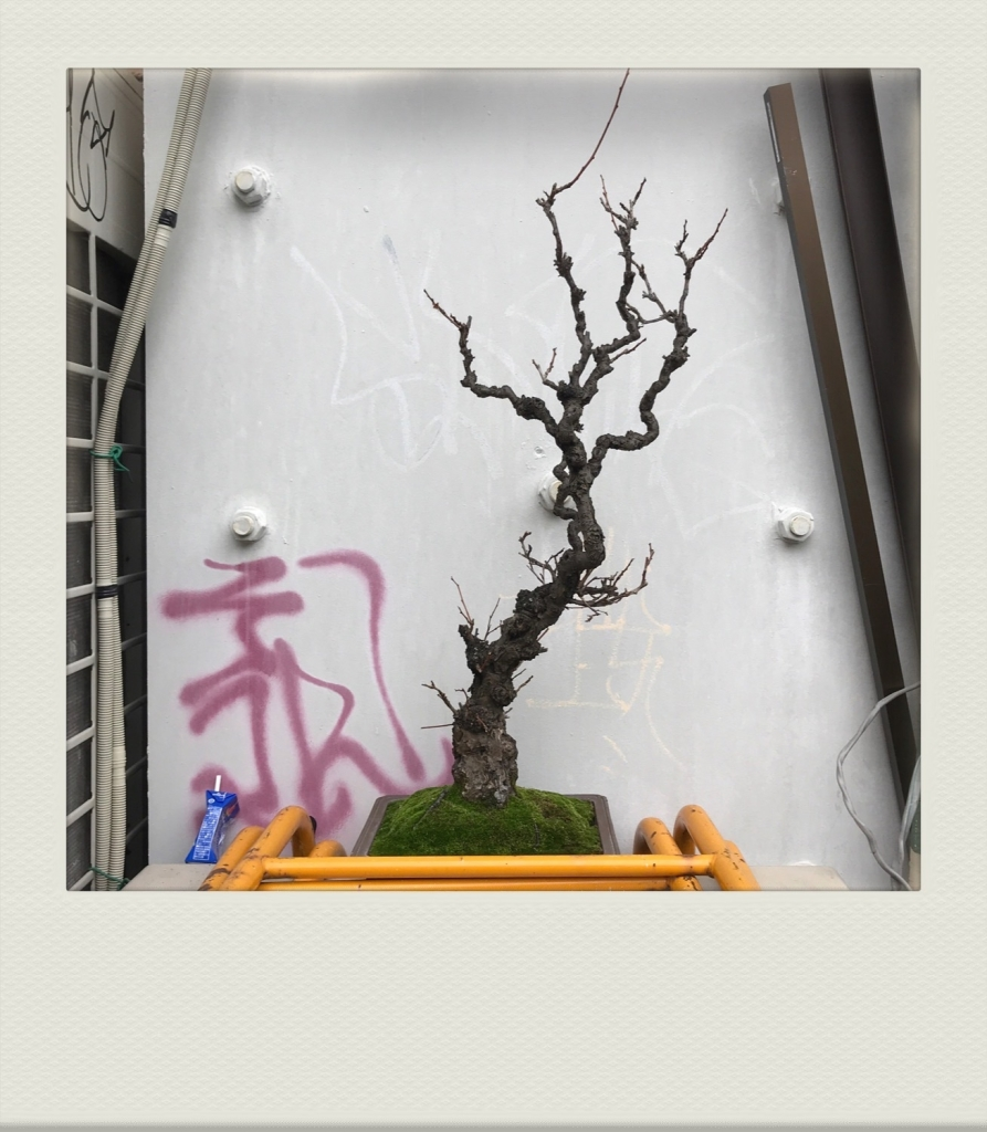 TOKYO-PH-202007-00010
