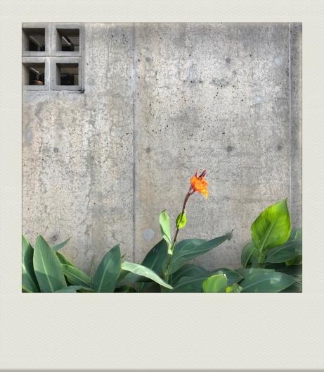OKINAWA-PH-202011-00003
